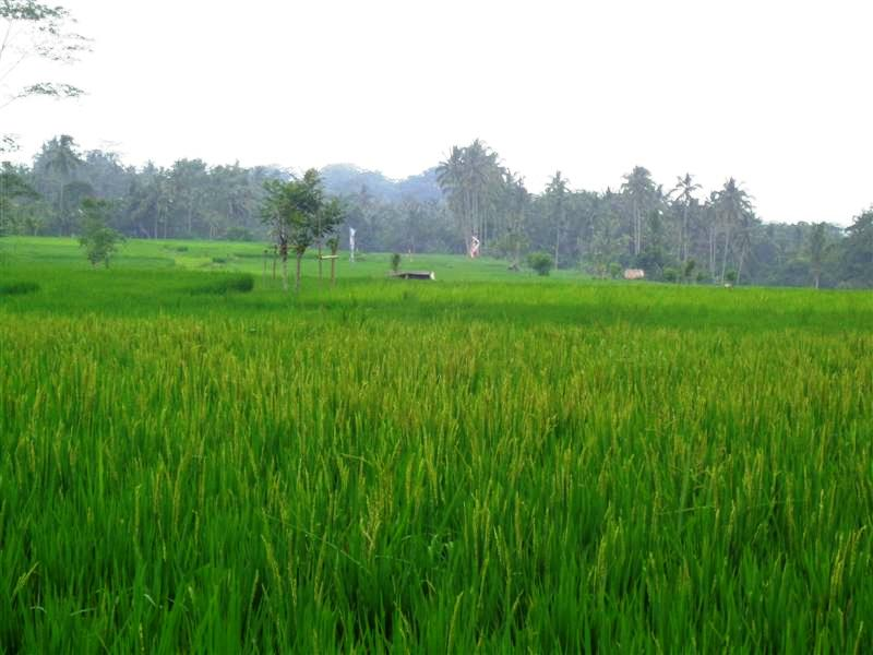 Land for sale in Ubud Bali 900 sqm Stunning view