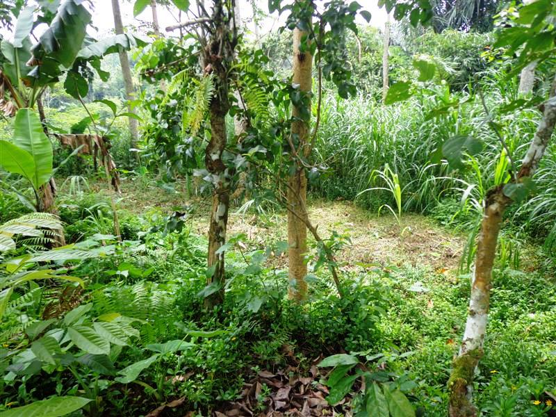 Land for sale in Bali 5,000 sqm by the river valley  in Ubud Tegalalang