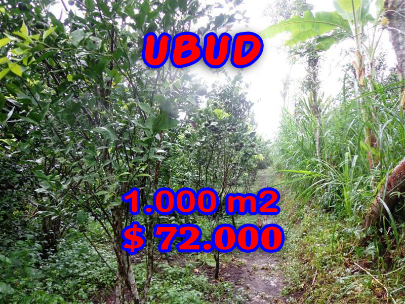 Land for sale in Ubud Easy Acces in Ubud Tegalalang Bali