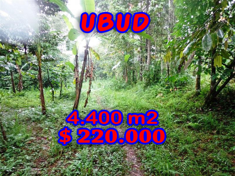 Land for sale in Ubud Bali 44 Ares in Ubud Tegalalang