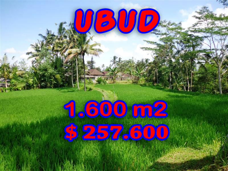 Land for sale in Ubud Bali Terraced rice fields in Ubud Tegalalang