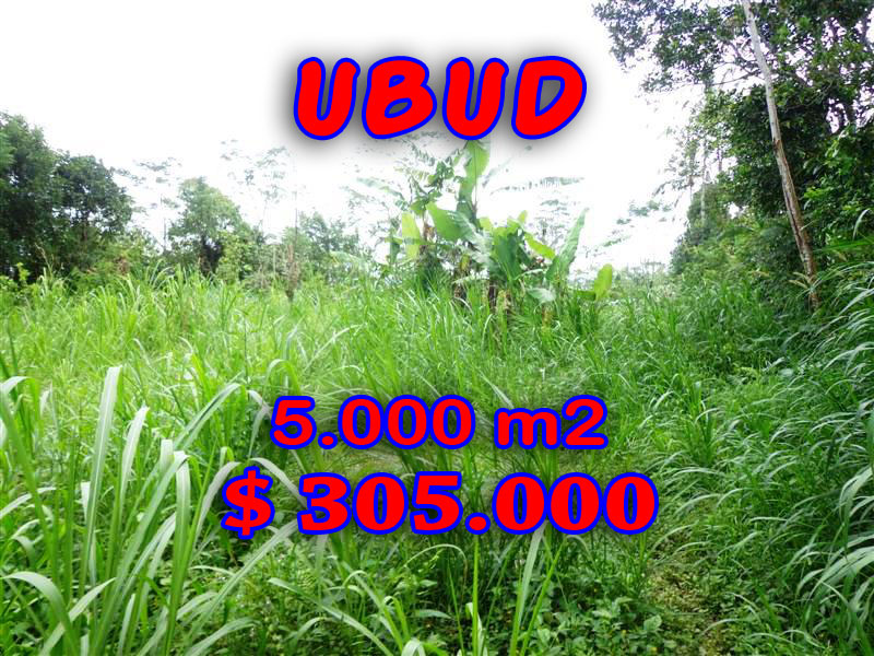 Land for sale in Ubud Bali rice fields view by the river in Ubud Tegalalang