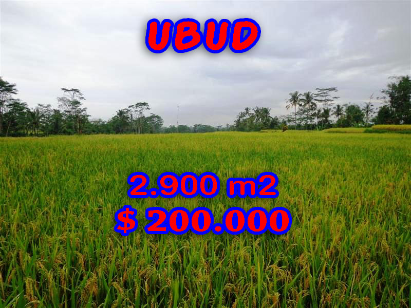 Land for sale in Bali, Fantastic view in Ubud Bali – 2.900 sqm @ $ 69
