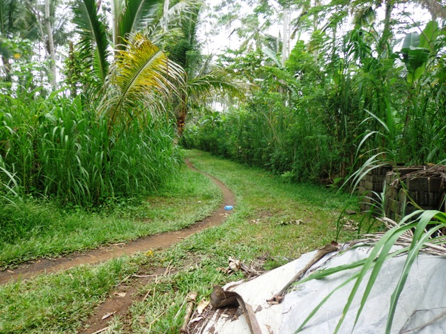 Land for sale in Ubud 62 Ares in Ubud Tegalalang Bali