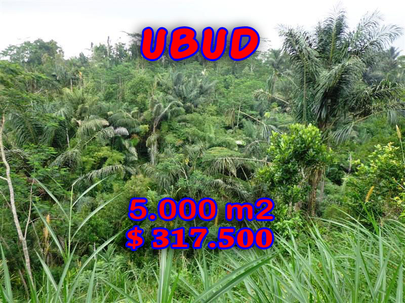 Land in Ubud for sale 50 Ares in Ubud Tegalalang  Bali