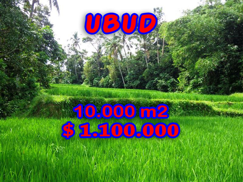 Affordable Land for sale in Ubud Bali 100