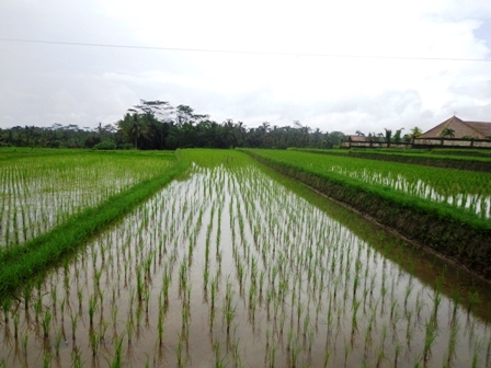 Land in Ubud for sale 25 Ares in Ubud Tegalalang Bali