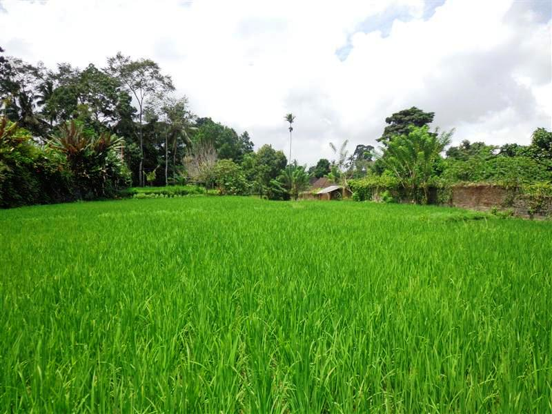 Land for sale in Ubud by the roadside in Ubud Tegalalang Bali