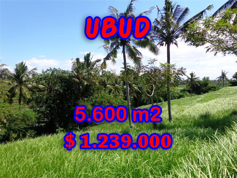 Land for sale Ubud Bali Stunning view in  Ubud Center – TJUB299