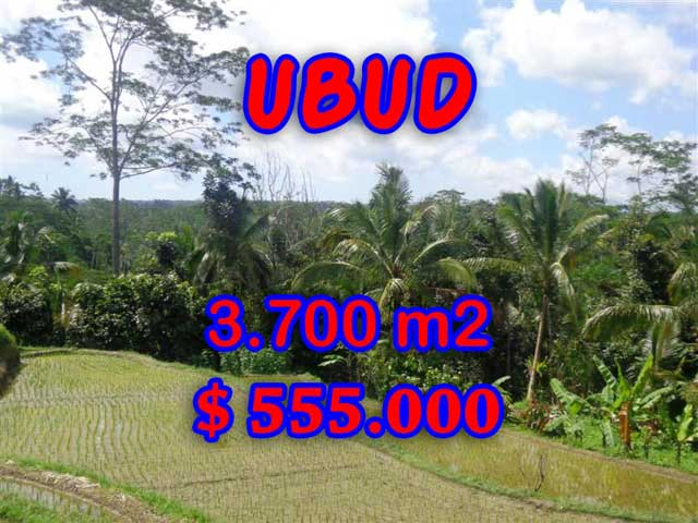 Splendid Property for sale in Bali, Ubud land for sale – 3,700 sqm @ $ 150