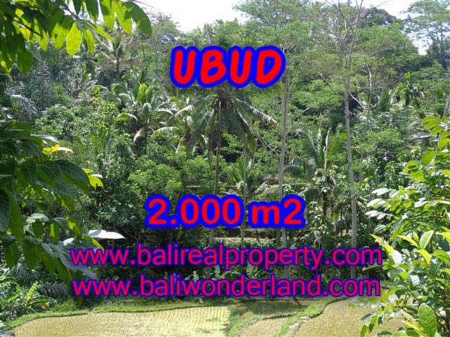 Land in Ubud Bali for sale, nice view in Ubud Tegalalang Bali – TJUB359