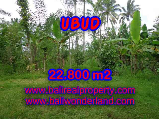 Amazing Land in Bali for sale in Ubud Tegalalang Bali – TJUB409