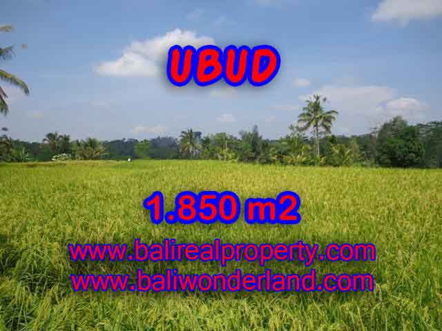 Beautiful Land for sale in Bali, Mountain and paddy view in Ubud Bali – TJUB410