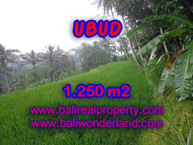 Stunning Land for sale in Bali, Ricefield view by valley in Ubud Bali - TJUB405