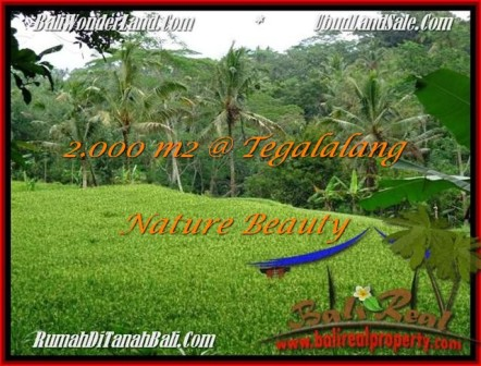 FOR SALE Exotic LAND IN Ubud Tegalalang BALI TJUB490