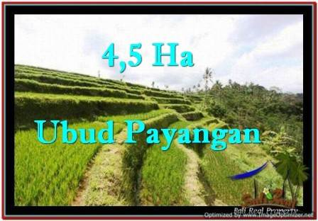 45,000 m2 LAND SALE IN UBUD TJUB533