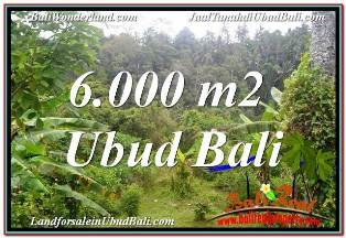 6,000 m2 LAND FOR SALE IN UBUD BALI TJUB682