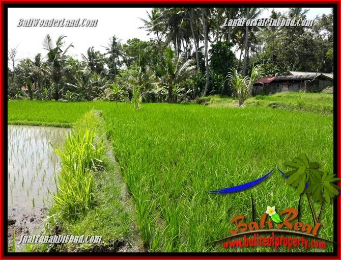 Exotic Property Land in Ubud Bali for sale TJUB697
