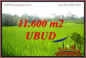 Exotic Property Ubud Tegalalang 11,600 m2 Land for sale TJUB732