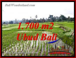 FOR SALE Affordable LAND IN TEGALALANG UBUD BALI TJUB770