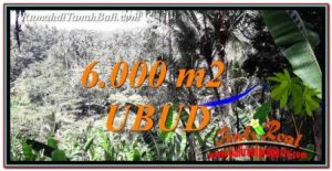 FOR SALE Affordable 6,000 m2 LAND IN UBUD BALI TJUB750